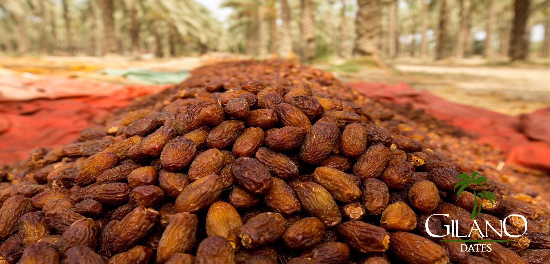 Pakistan Organic Dates